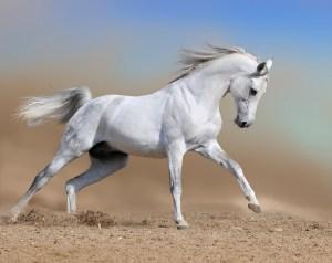 caballo-www-10imageneshermosas-com